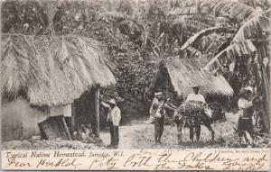Typical Native Homestead Jamaica W.I. c1906 Postcard E41