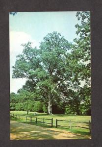 TN Largest Pecan Tree Natches Trace State Park Lexington Tenn Tennessee Postcard