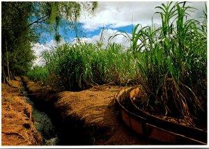 Hawaii Sugar Cane and Irrigation Canal