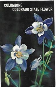 Columbine Colorado State Flower.