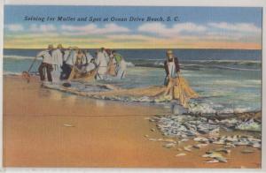 Seining for Mullet, Ocean Brive Beach SC