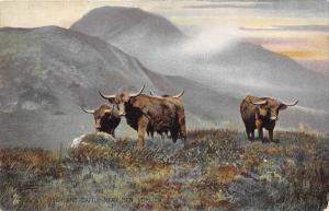 10249 Tuck's no.4495 Highland Cattle Near Ben Vorlich Steers