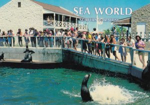 GOLD COAST , Queensland , Australia , 1987 ; SEAWORLD #2