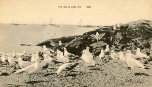 Sea Gulls & The Sea