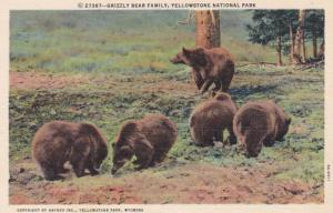 Yellowstone National Park Grizzly Bear Family Curteich