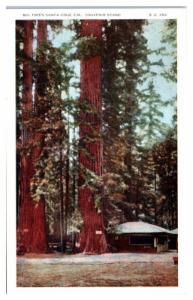 Big Trees, Santa Cruz, CA Souvenir Stand Postcard