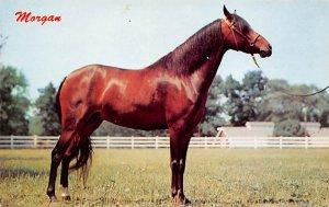 Morgan Oneonta, New York, USA Horse Unused