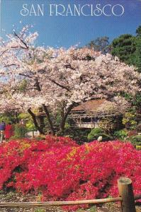 California San Francisco Japanese Tea Garden