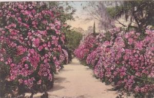 Middleton Gardens Charleston South Carolina Handcolored Albertype 1937