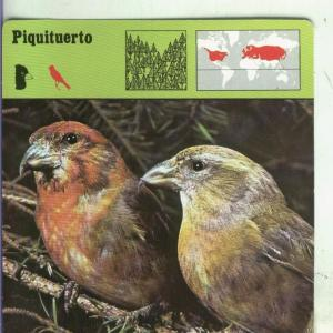 Postal: Ficha Sape Coleccionable: Piquituerto
