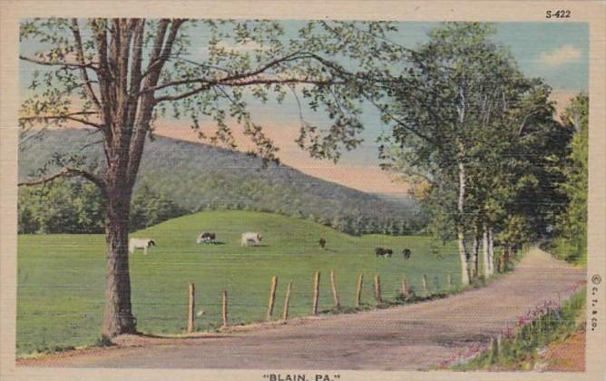 Pennsylvania Blain Cattle Grazing Scene