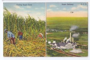 Clewiston FL Sugar Cane Harvest Refinery Curteich Linen 1943