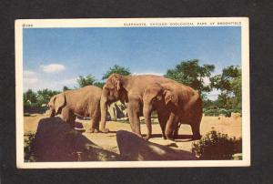 IL Elephants Chicago Zoological Park Brookfield Illinois Zoo Animals Postcard