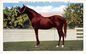 The Northstar III, the wonder horse KY, USA Horse Unused