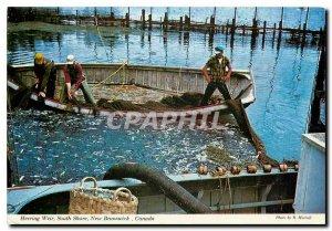 Modern Postcard Herring Weir South Shore New Brunswick Canada