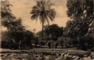 CPA Indonesia, Groet uit Buitenzorg (360663)