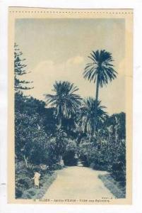 ALGER - Jardin d'Essai- Allee des Palmiers, 00-10s