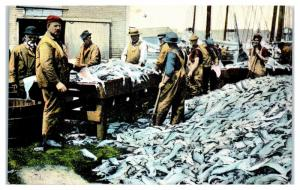 Early 1900s Splitting Fresh Fish at the Port, Gloucester, MA Postcard