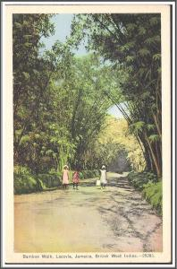 Jamaica Bamboo Walk Lacovia Postcard