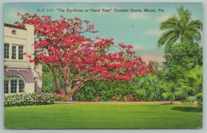 Miami Florida~Erythrina Coral Tree~Coconut Grove~Vintage Postcard