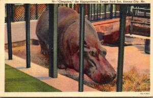 Missouri Kansas City Swope Park Zoo Cleopatra The Hippopotamus Cu...