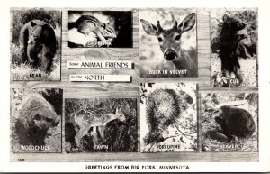 Minnesota Greetings From Big Fork With Animals In The North
