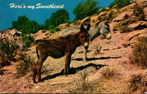 Donkeys Here's My Sweetheart
