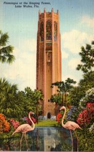 Florida Lake Wales Flamingos At The Singing Tower 1945 Curteich