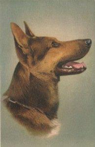 DOG ; Alsatlan Wolfhound , 1930s