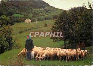 Modern Postcard La Bergere and his Flock