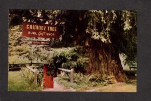 CA Park Redwood Trees Forest Highway Gift Shop Tree Chimney California Postcard