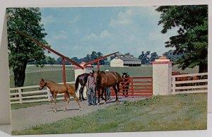 Calumet Farm Kentucky Horse Farm Man With Horses Vintage Postcard unposted