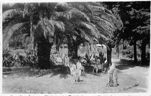 Montenegro Garden, Terrace, Palm Tree, jardin, garten, Herceg Novi 1937