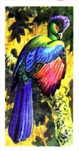 Brooke Bond Trade Card Tropical Birds No 9 Purple-Crested Turaco