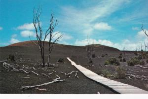 HAWAII, 1939-60s; Devastation Trail, Volcanoes National Park