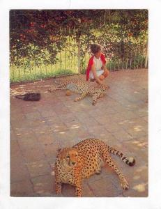 Ethiopa, Addis Ababa 1950s-60s , Cheetahs at Jubille Palace of his Imperial M...