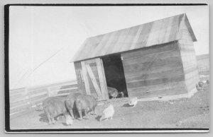 Farm: Real Photo Postcard~Hog House~Pig Pen~Chickens Pecking Around~c1912 RPPC