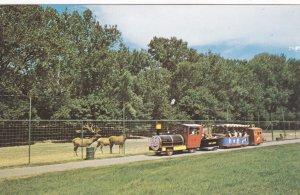 BISMARCK, North Dakota, 1950-60s; Miniature Train at Zoo