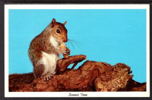 Dinner Time,Squirrel
