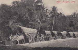 Native Transport , CEYLON , 1900-10s
