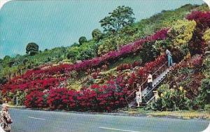 Hawaii Kona Machado Garden Kealakekua