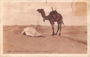 Algeria Scenes Et Types La Priere au Desert Camel