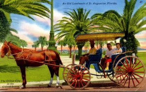 Florida St Augustine Sightseeing Carriage 1967