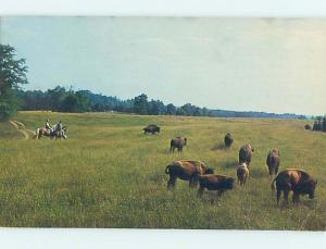 Pre-1980 BUFFALO AT THE RANCH Concord North Carolina NC hn5256