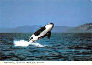 Killer Whale - Vancouver Island, Canada, British Columbia