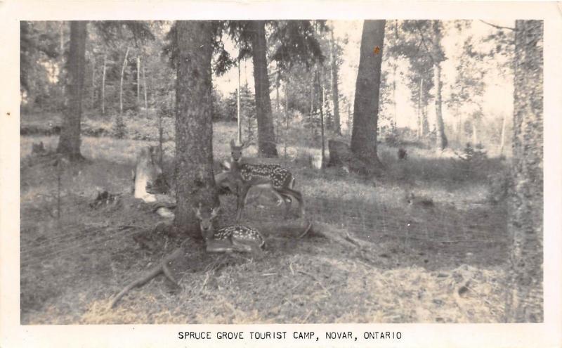 C32/ Novar Canada Ontario Real Photo RPPC Postcard Spruce Grove Tourist Camp 40s