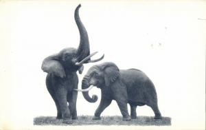 Chicago, Ill., Natural History Museum, African Elephants 1940s Elephant Postcard