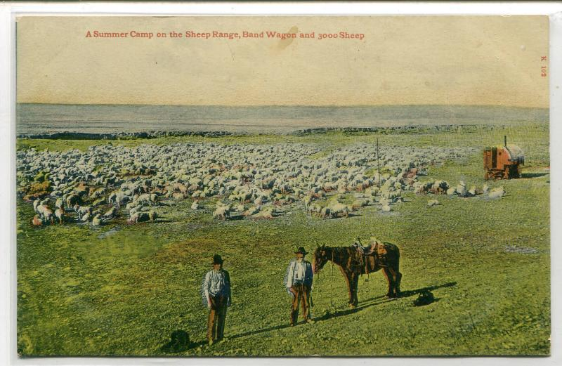 Summer Camp Sheep Flock Range Cowboy Western 1910c postcard