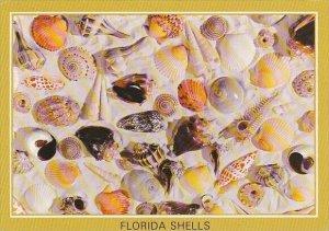 Florida Shells 1990