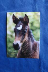 Riding Pony Foal / Horse Equine Postcard Irene Hohe German Photography